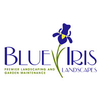 Blue Iris-crack